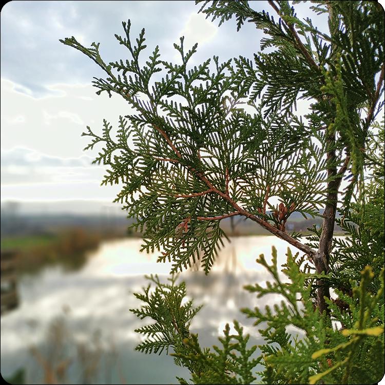 krajobraz z efektem bokeh Xiaomi Mi 8 Lite