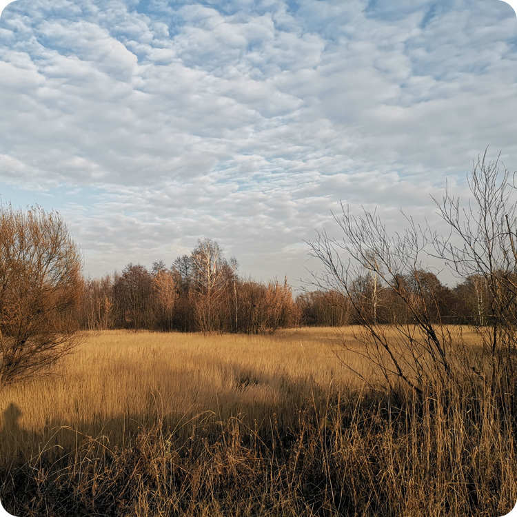 zdjęcie krajobrazowe Huawei Mate 20